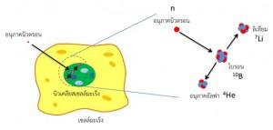 BNCT-process